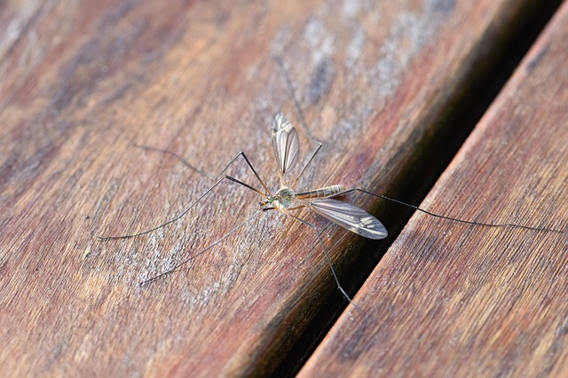 Lotta alle zanzare